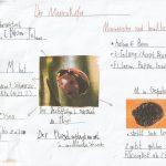 Die Ameise und  der Marienkäfer
